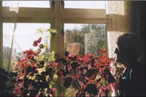 Fra Olga Ambjørnruds dagligstue er det utsikt sydover til fjorden. Hun stortrives ved siden av sine blomster.