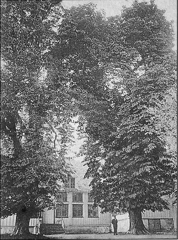 """Drøbak gård, Niels Calsens-familiens praktfulle residens fra 1754 - 1819, er en perle blant Drøbaks trebygninger. Ved porten inn til """"Solgry"""" i dag står det to grantrær, der hvor det frem til midt på 1930-tallet sto to høye popler. Og innenfor dem igjen flere kjempestore kastanjetrær. De to som vi ser på dette brevkortet fra 1908, ble regnet som Norges største kastanjetrær. Det er ikke så mange år siden de måtte felles p.g.a. elde. Ta en tur innom «Solgry»-eiendommen og se på den stubben som enda er synlig."""